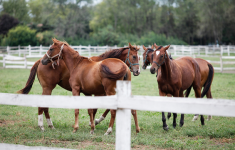 כל מה שרציתם לדעת על רכיבה על סוסים