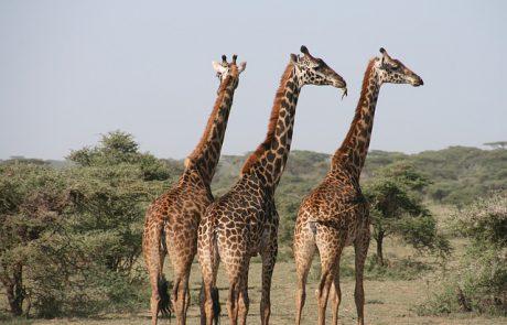 טיול לטנזניה – מהן האופציות העומדות בפניכם?