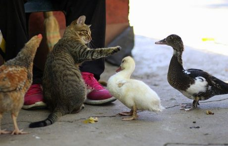 איך בוחרים מזון לחתולים בצורה נכונה?