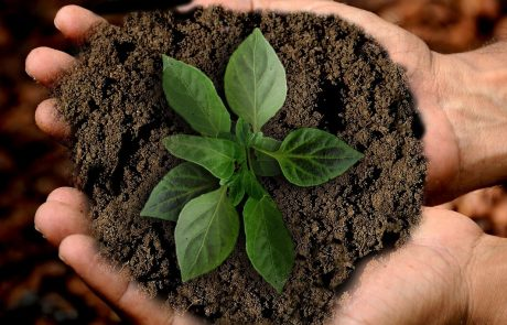 על יום האהבה – לסביבה ולבריאות – כבר שמעתם?
