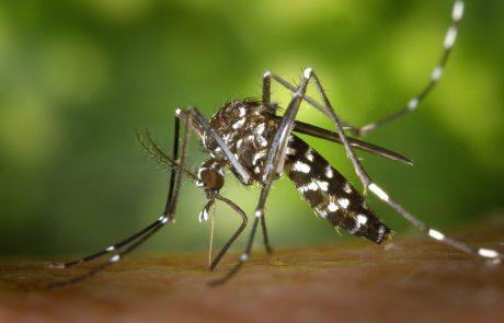 הדברה נגד יתושים