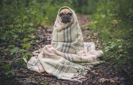 חיסוני חובה תקופתיים לכלבים